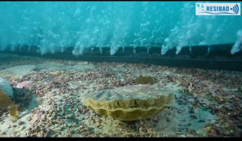 Des rideaux de bulles pour atténuer les effets des ondes acoustiques sous-marines d'origine anthropique